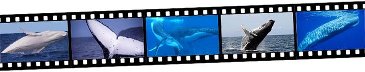 ザトウクジラPhotograph