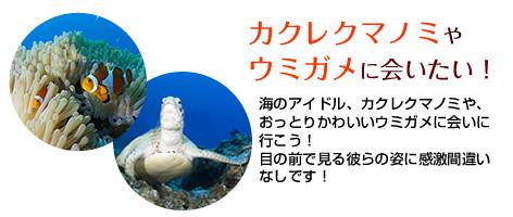 カクレクマノミやウミガメに会いたい!海のアイドル、カクレクマノミや、おっとりかわいいウミガメに会いに行こう!目の前で見る彼らの姿に感激間違いなしです!