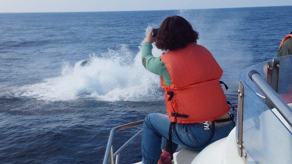 ザトウクジラ絶好の撮影チャンス