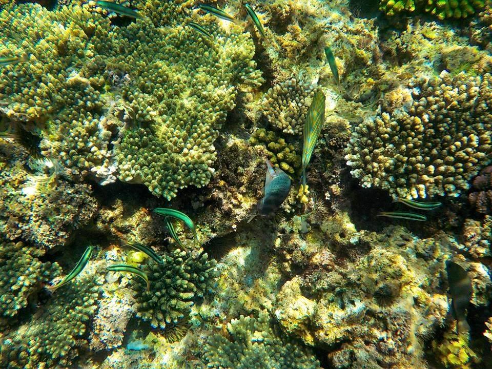 お魚さんたちと珊瑚