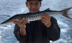 沖釣りに行ったら、カマサー(カマス)が釣れました。