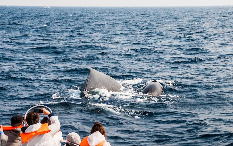 雌クジラへの♡求愛♡